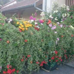 2015-char fleuri - comice agricole 2015